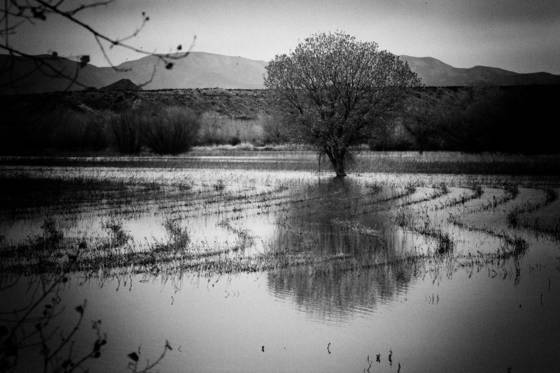 Flooded_field