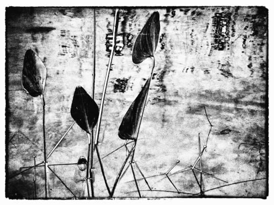 Pond_life