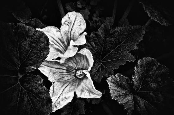 Twin_flowers
