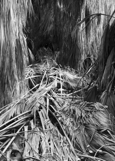 Palm_grove