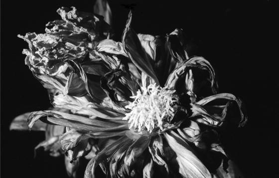 Floral__2