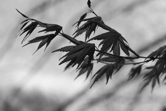 Windy_leaves
