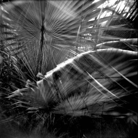 Wind_in_the_palms