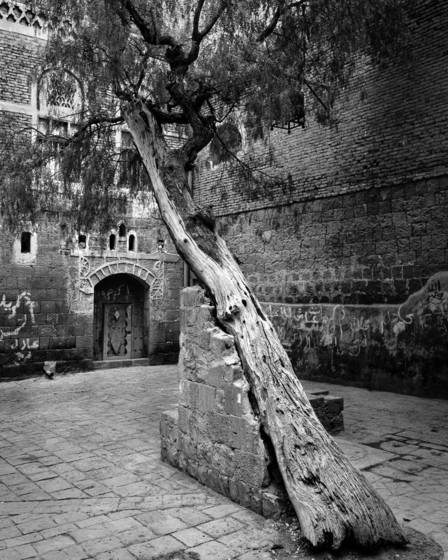 Leaning_tree_courtyard