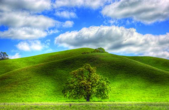 Lone_valley_oak