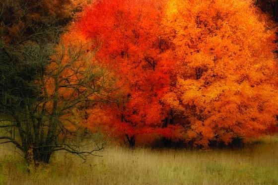 Fall_fire