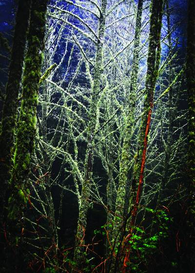 A_dark_night_in_a_bright_forest