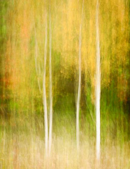 Autumn_impression