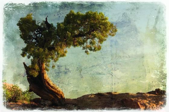 Lone_tree