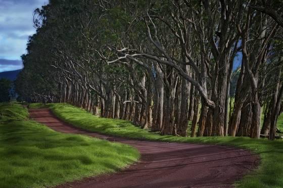 Mana_road