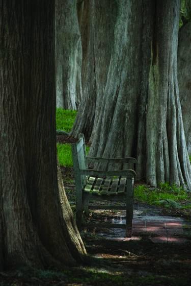 Cypress_bench