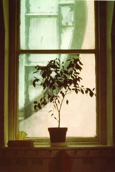 Church_school_window