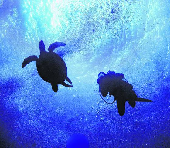 Turtle_and_diver