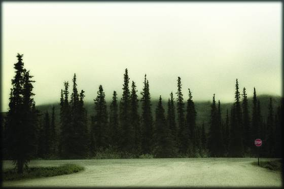 Denali wilderness