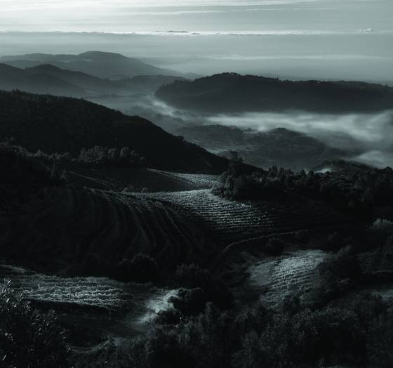 Sonoma_valley_fog