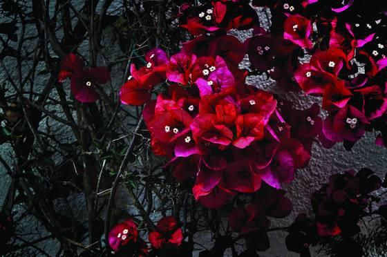 Monterey_flowers