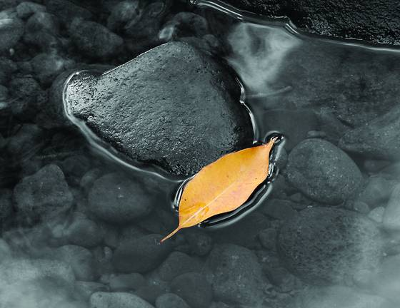 Floating_leaf