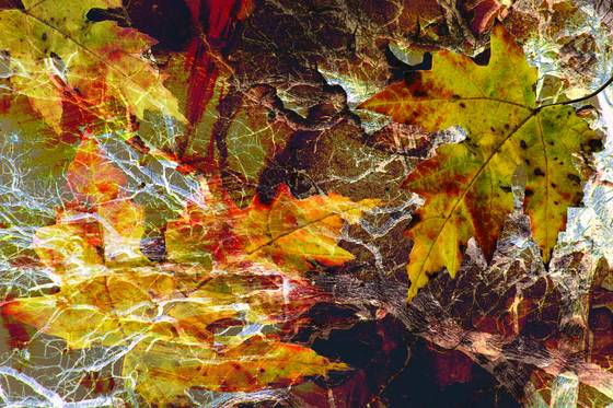 Fall_leaves_2