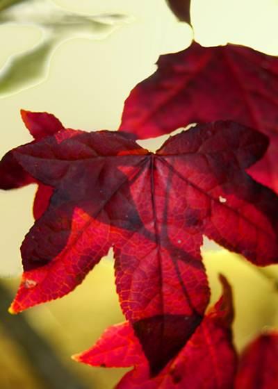 Fall_foliage_4