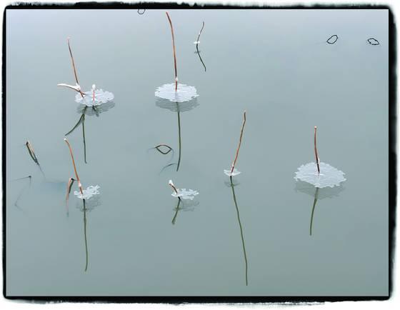 Ice_flower