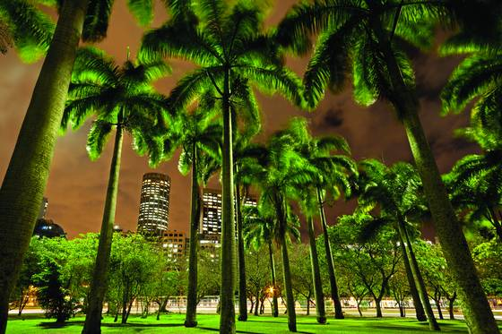 Downtown_palm_trees