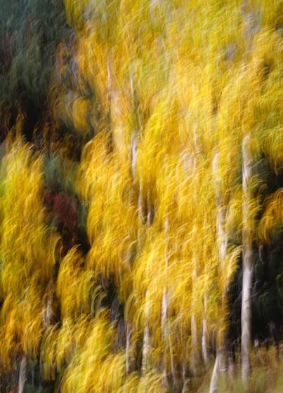 Aspen_painting
