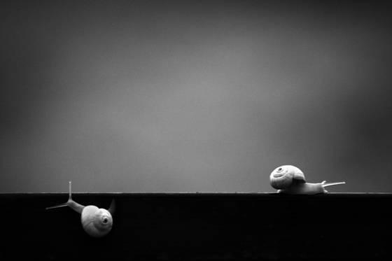 Snail_26