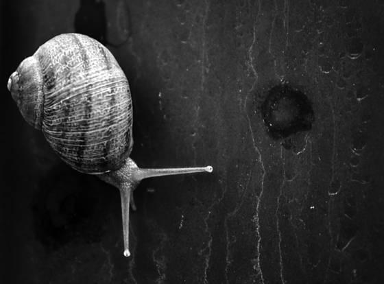 Snail_64