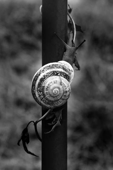 Snail_9