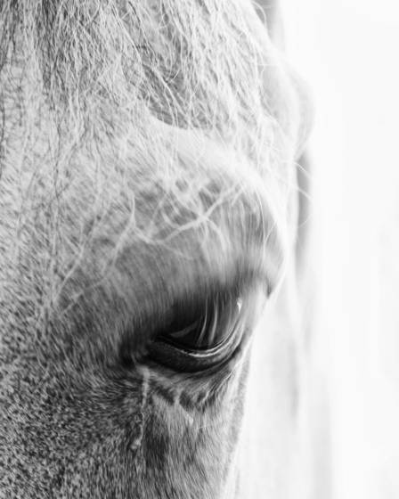Equines_3