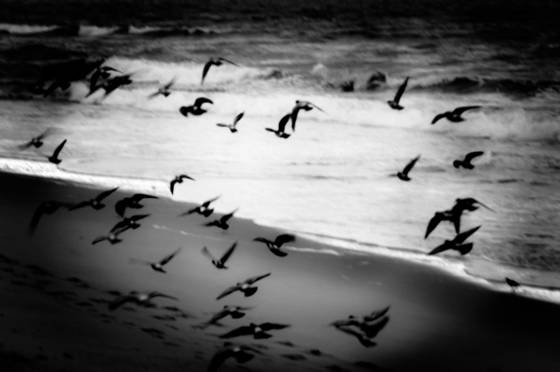 Birds and surf