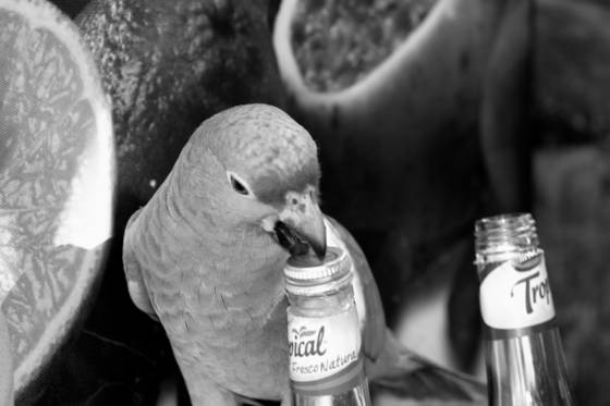 Thirsty_bird