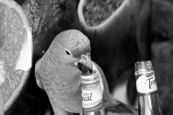 Thirsty_bird