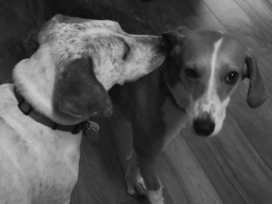 Dogs_telling_secrets
