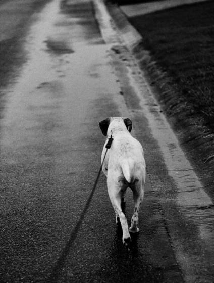 Walking_the_dog