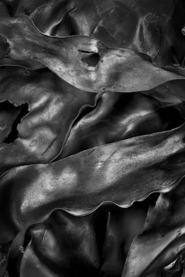 Seaweed_9