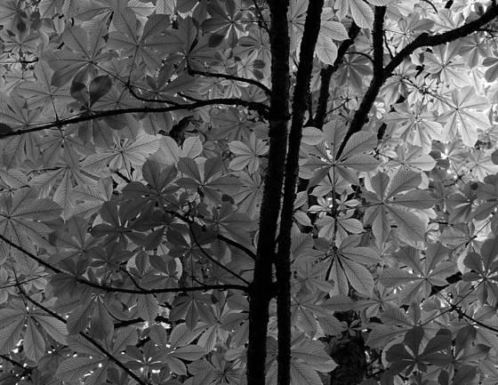 Spring_leaves