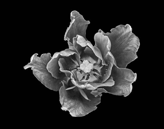 Floral_portrait