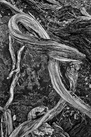 Wind_twisted_branches
