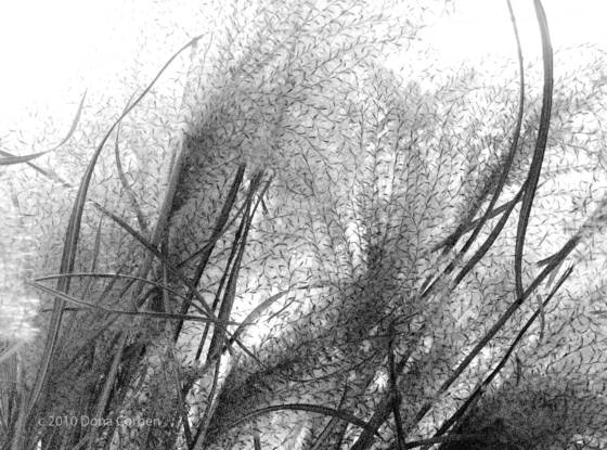 Dried_grasses