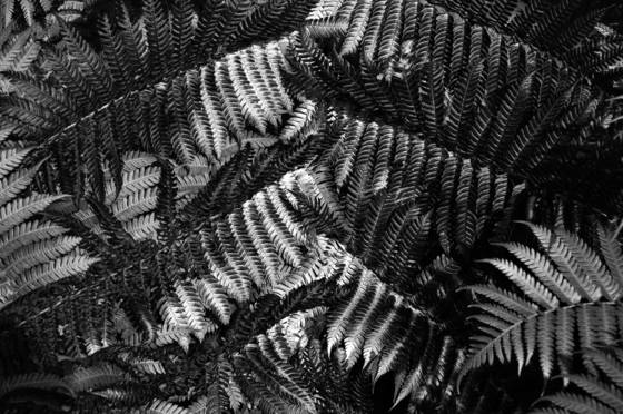 Patchwork fern
