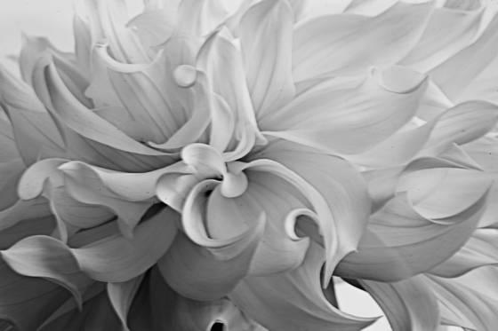 Flowers__11