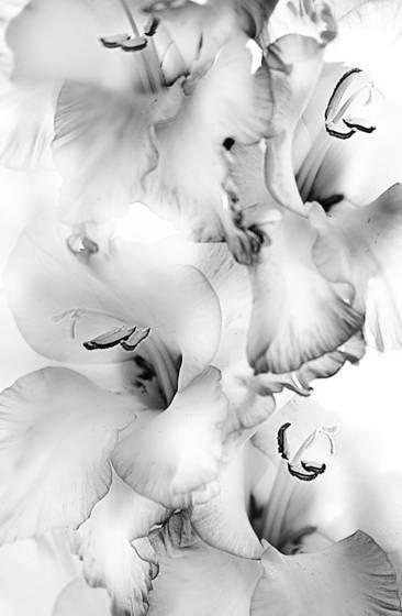 Flowers__6