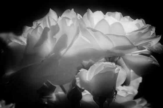 Flowers__7