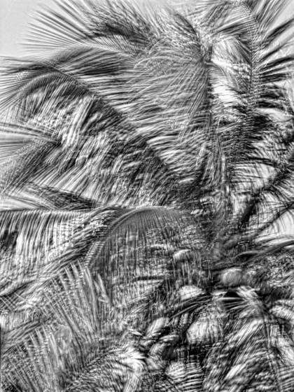 Windblown_palms__1