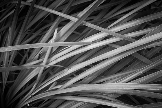 Ornamental_grass