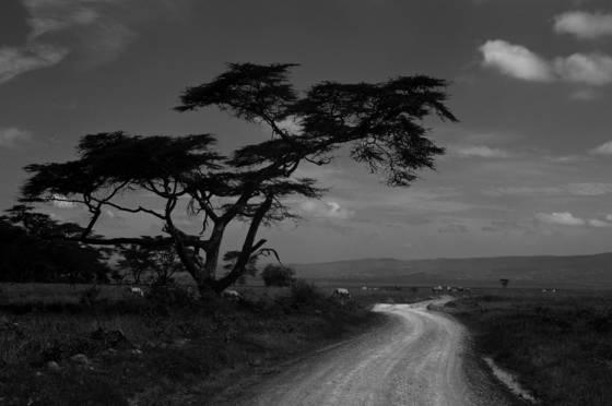 Zebra_road
