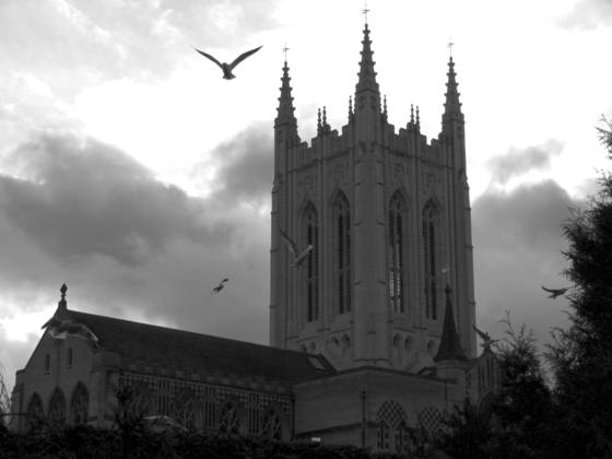 Cathedral_birds