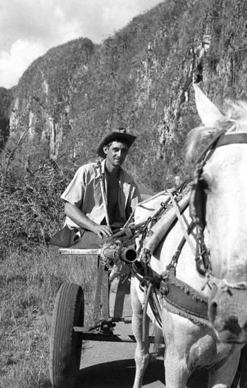 Horse_cart_driver
