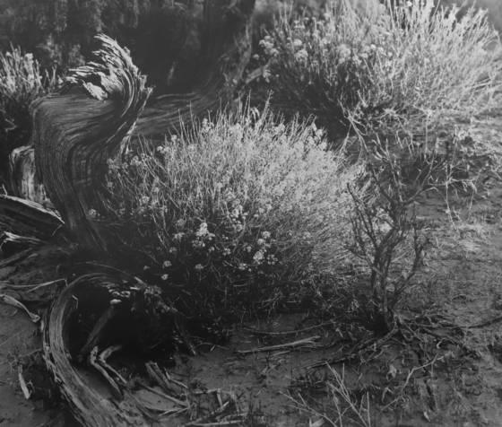 Desert_spring
